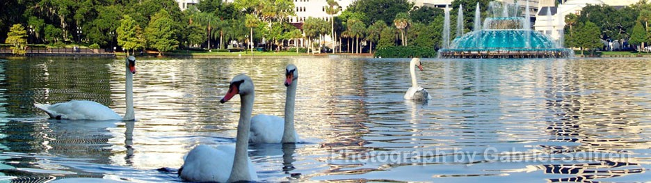 cropped-Lake-Eola-6-copy.jpg